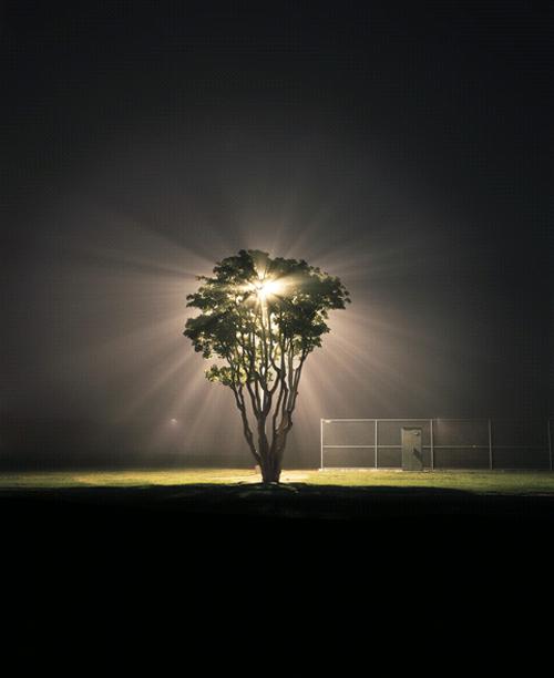 Amanda Friedman Tree Marina Del Rey